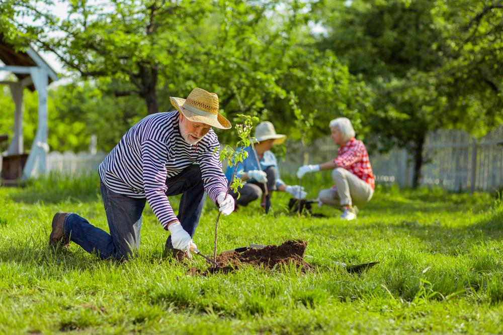 Drie ouderen werken in een tuin